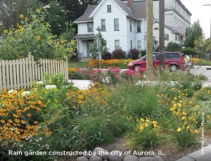Rain garden constructed by the city of Aurora, IL.