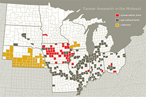 Weed scientists are finding Palmer amaranth across the Midwest. Counties in black indicate Palmer amaranth was first found in an agricultural field, whereas red indicates it was first detected on conservation program land. Yellow signifies the source of introduction was not identified. Graphic by Julie McMahon