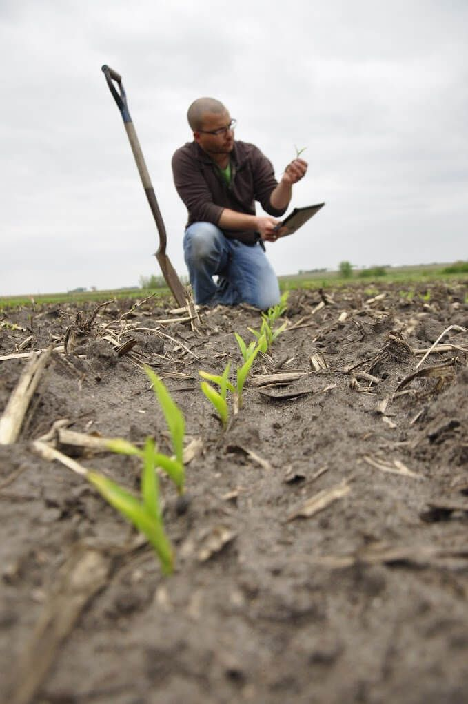 Scouting crop fields on a regular basis can help to determine emerging crop problems and helps to inform management decisions. Image by Brandon Kleinke.