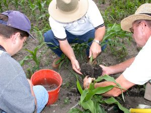 Hands on training to look for corn pests.